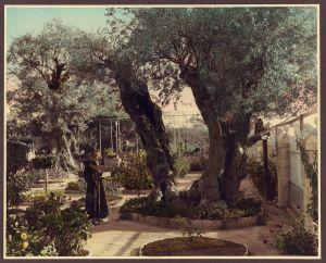Monk in Gethsemane, Jerusalem
