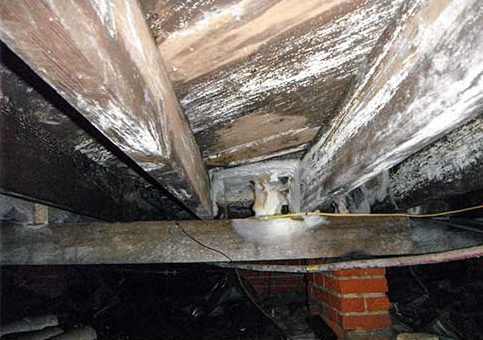Wood rot and crawl space mold