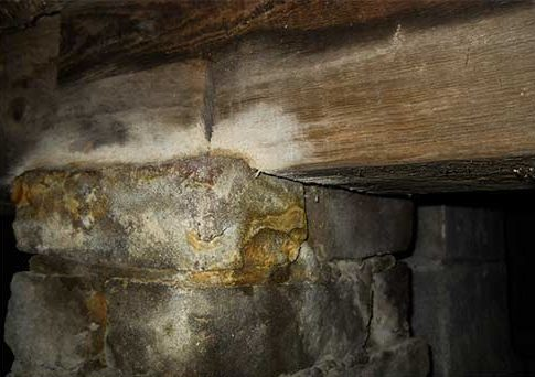 Mold growth in crawl space on floor supports