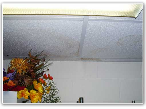 What looks like a 'simple leak' after rain can cause serious problems because mold will begin to grow after 2/3 days.