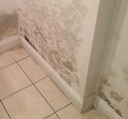 moisture and basement mold