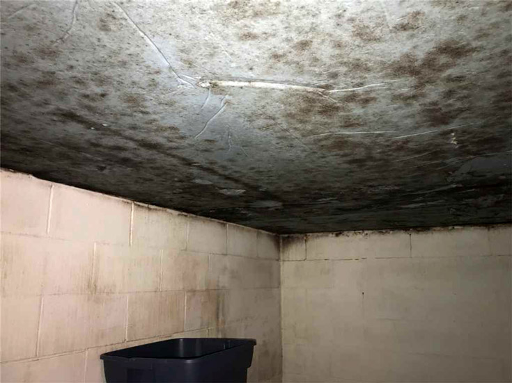 Mold on basement wall and ceiling
