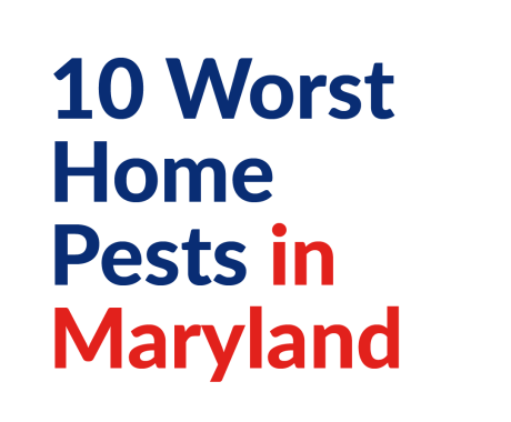 10 Worst Home Pests in Maryland