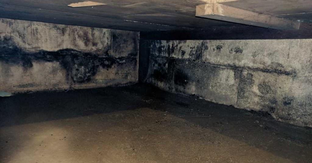 moldy corner