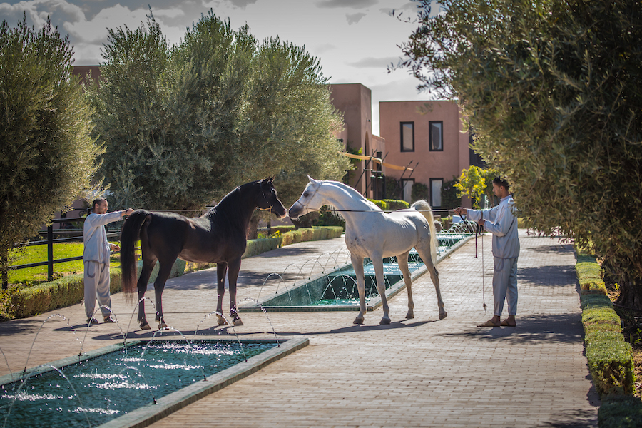 Selman Horses