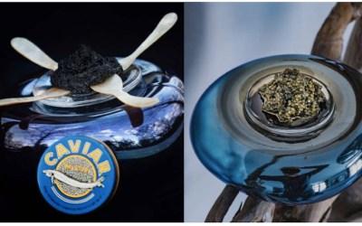 DROP par Bohemian Caviar et Datch