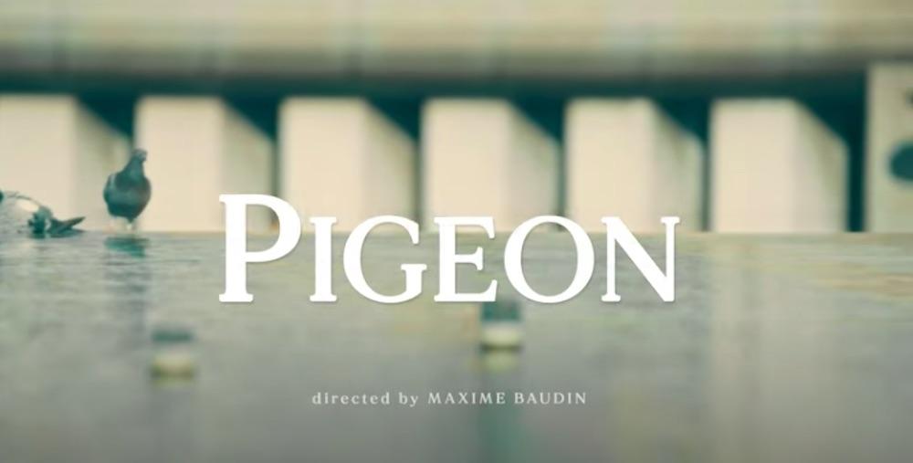 The Supermen Lovers · Pigeon