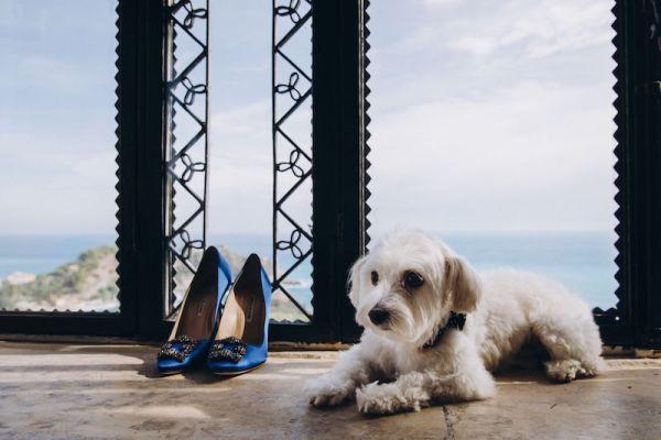chiot-avec-chaussures-manolo-blahnik