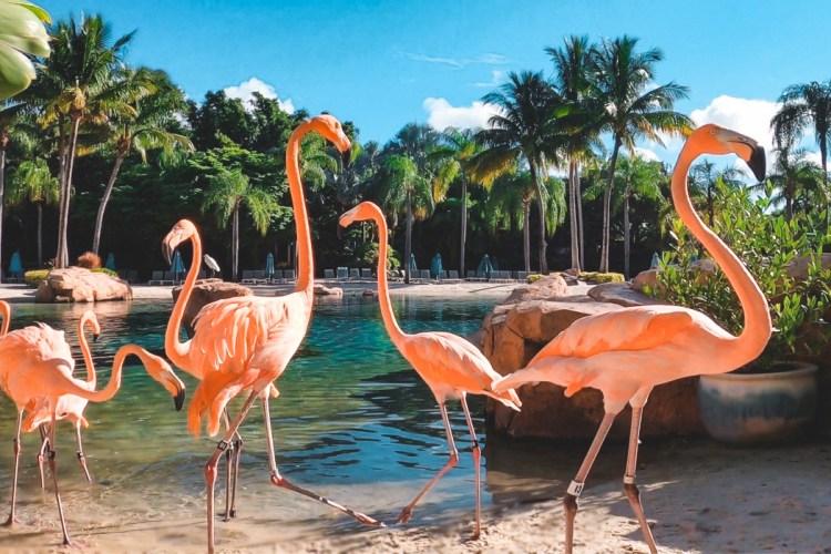 flamingoes in Florida