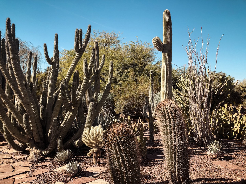 Scottsdale, Arizona Travel Guide