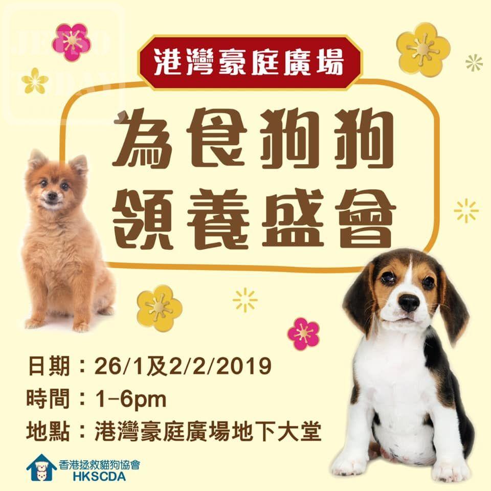 香港拯救貓狗協會 港灣豪庭廣場「為食狗狗領養盛會」 - Jetso Today