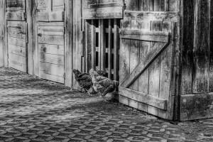 Ausstatung von Hühnerkäfig im Test & Vergleich