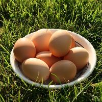 Bio Hühnerhaltung Eier