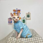 ZHIHAN Sphinx Chat vêtements Mince T-Shirt Gilet en Coton, Couleur 1, XXXL-