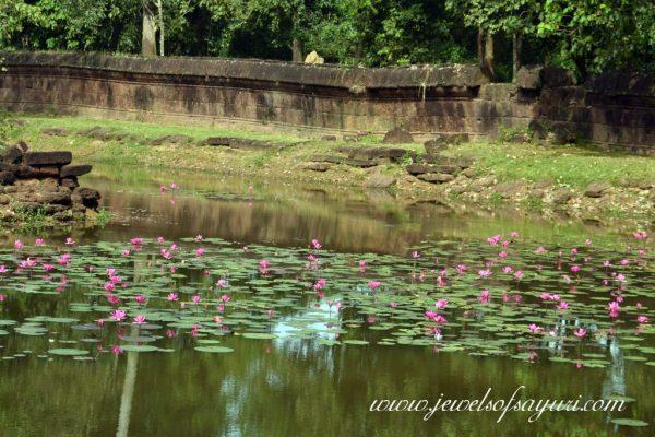 Bantaey Shrei Lily pond