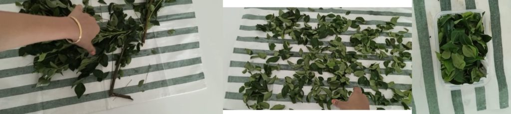 how to store curry leaves