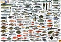 ゆかいな朝どれ鮮魚たち20190121V