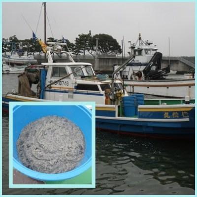 2016.3.11しらす漁解禁