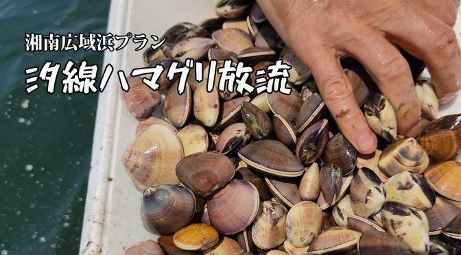 湘南広域浜プランにて、ハマグリ放流♪増えろ資源!