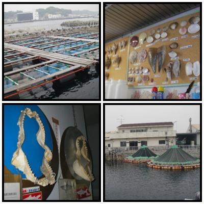 2012.5.9神奈川県水産技術センター