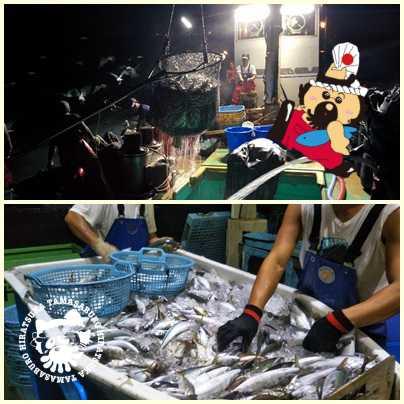 漁師募集の写真 タマ三郎つき