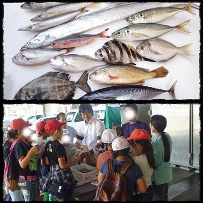 平塚ろう学校 漁港市場見学