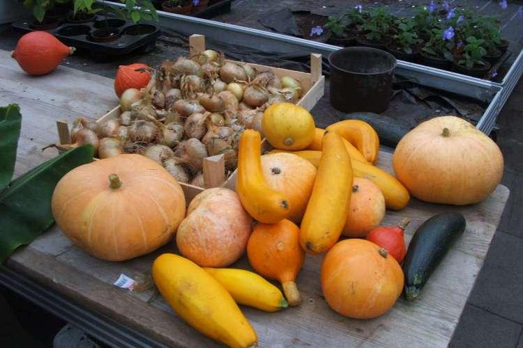 Gemüse aus der Gärtnerei