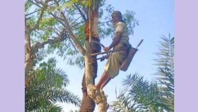 Photo of ভোর থেকে ব্যস্ত হরিণাকুণ্ডুর গাছিরা