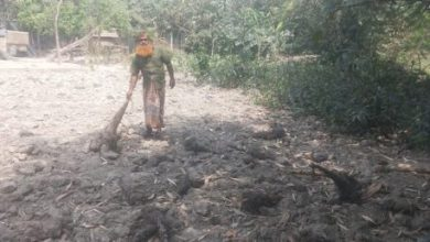 Photo of ঝিনাইদহে আবারও গাছের সাথে শত্রু্তা