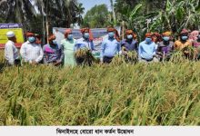 Photo of ঝিনাইদহে বোরো ধান কর্তন উদ্বোধন