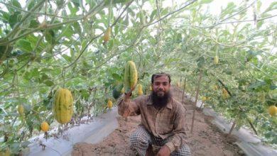 Photo of ঝিনাইদহে তরমুজে ভাগ্য বদল কৃষক রশিদের