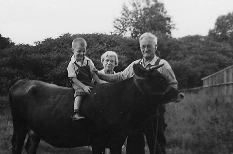 boy on a cow