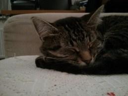 Cleo fast asleep