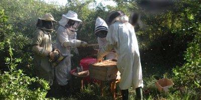 Tanzania Beekeepers to use Barcodes