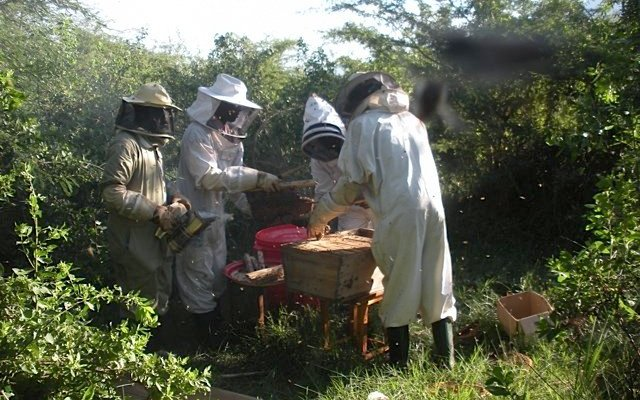 Tanzania Beekeepers to use Barcodes