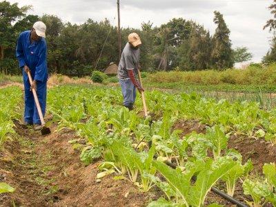 Farmers Tanzania agriculture financing