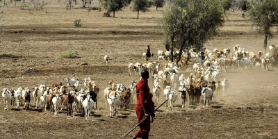 Maasai decry government intimidation of witnesses in land case