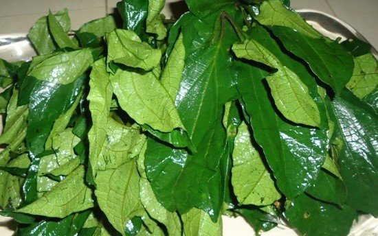Pumpkin leaf for preparing Egusi soup or west African pumpkin soup with melon