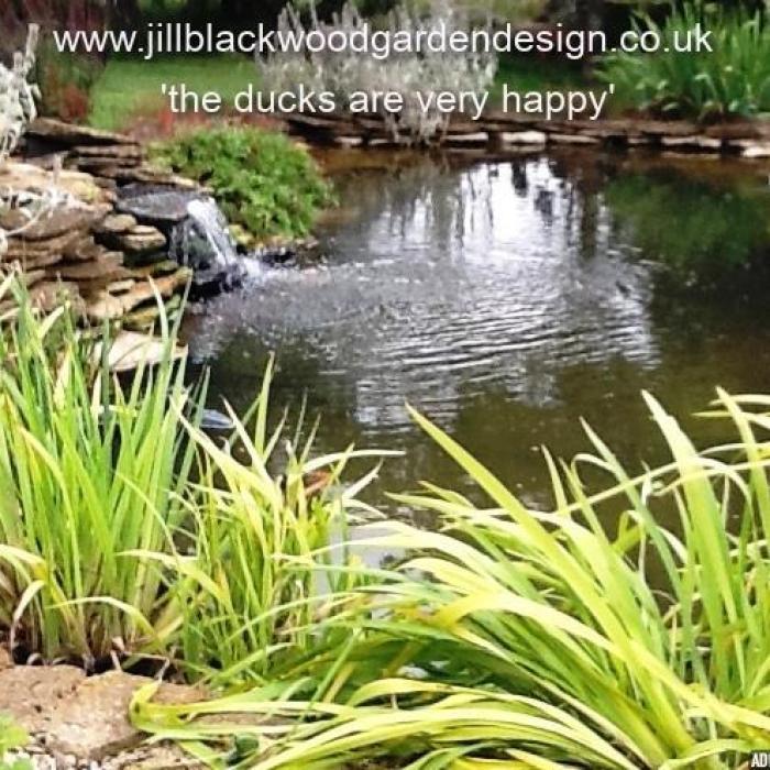 Garden Design Swindon, Wiltshire - Pond For Ducks