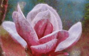 _Mmagnolia blossom LilyPondHD2WM