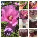 Wild Flower and Herb Jellies
