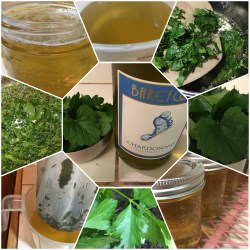 Parsley Jelly
