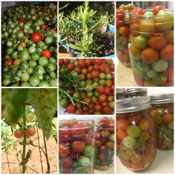 Rosemary Cherry Tomatoes