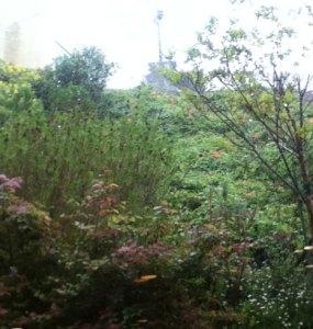 Back-Garden