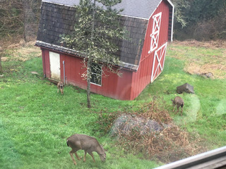 Fiber Dreams: Deer rising the barn