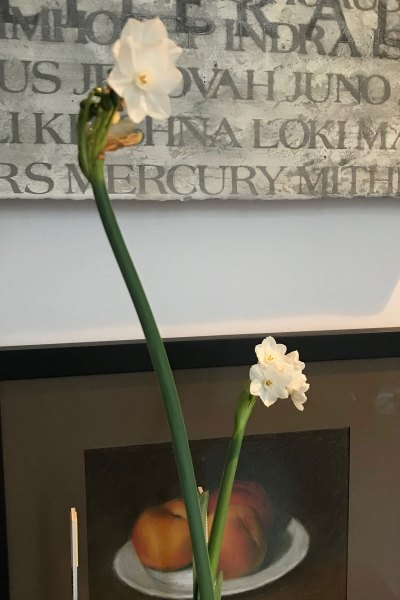 Jill Wolcott Knits Photo of Narcissus