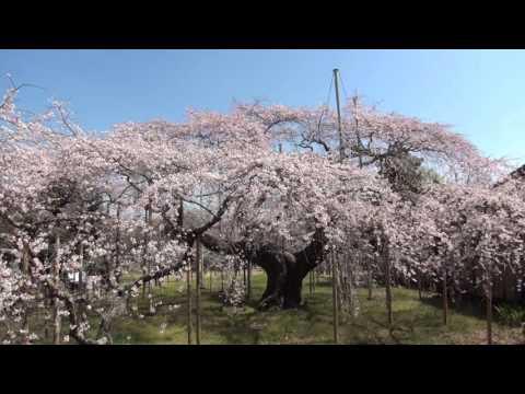 『茨城県龍ケ崎市』の動画を楽しもう!