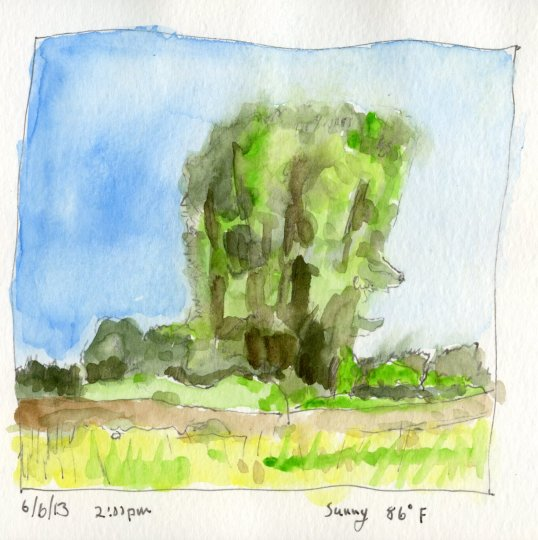 Minto Island Trees Watercolor