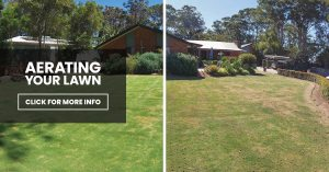 Spring Lawn Renovation: Aerating Your Lawn