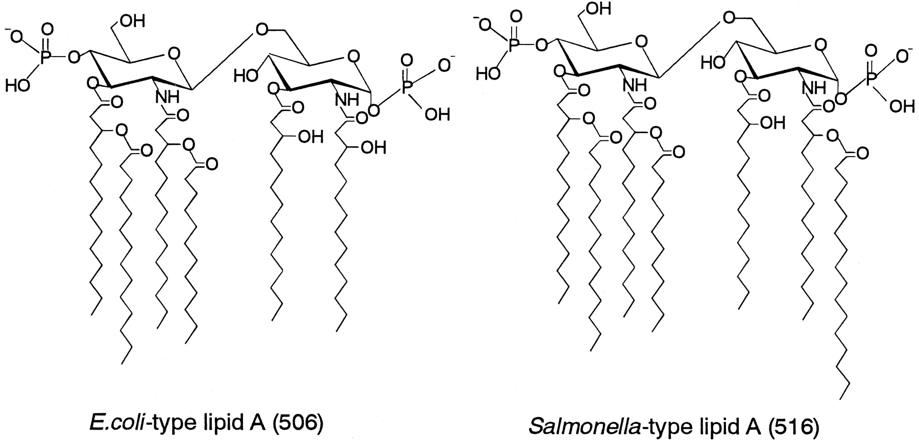 Salmonella Type Heptaacylated Lipid A Is Inactive And Acts As An Antagonist Of